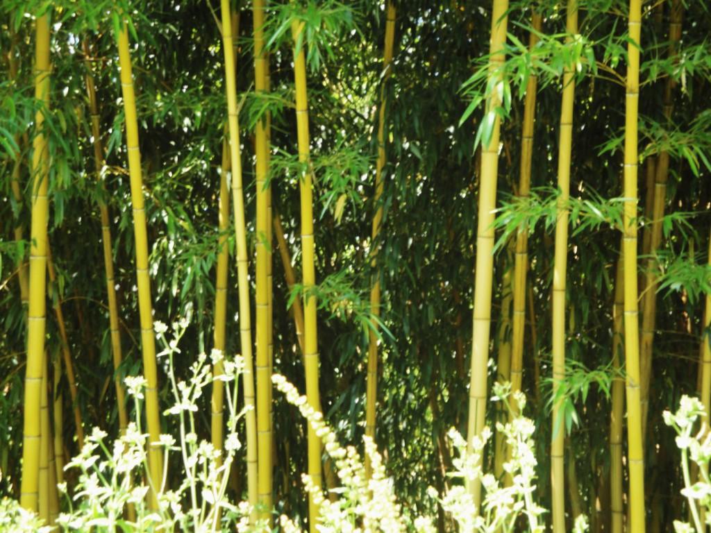 L'autre Bambouseraie……