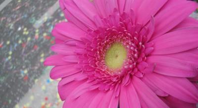 Et si on se jettait des fleurs !