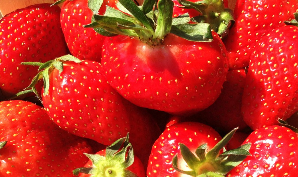 Sucrées ….les fraises !