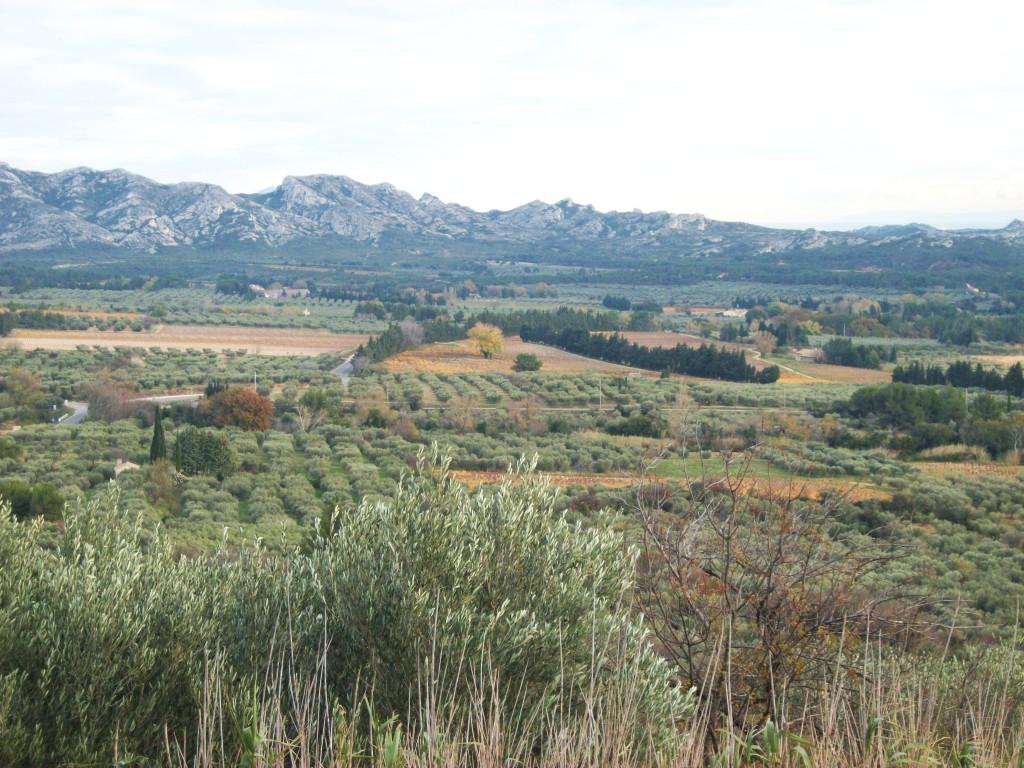 Oliviers Vallée des Baux de Provence