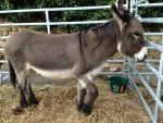Fête de l'âne - Allauch Provence
