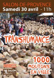 Transhumance Salon de Provence
