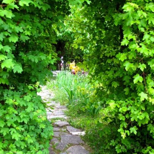 Le jardin sauvage de Cabries