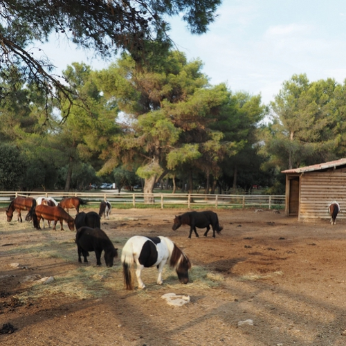 Poney club - Parc de Figuerolles - Martigues