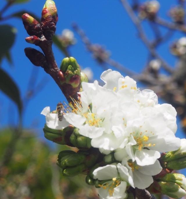 🌸Le verger des croqueurs de pommes de Provence est en fleurs et sera ouvert les 1er Mai et 8 mai🌸