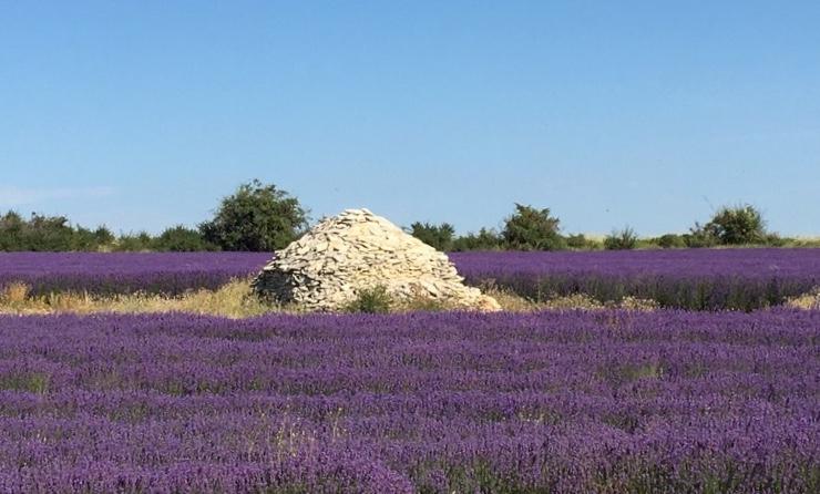 Les routes de la lavande en Provence vers le chemin du bonheur 💜