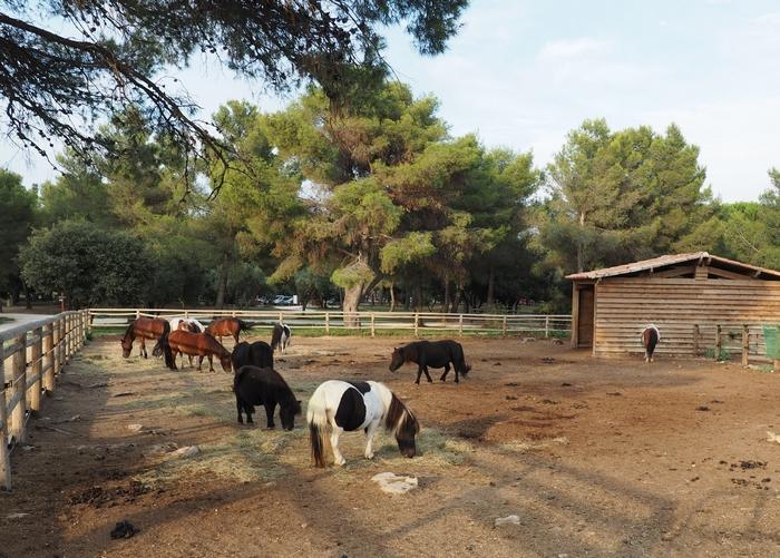 Poney club - Parc de Figuerolles - Martigues